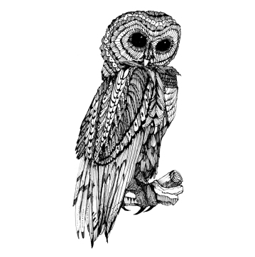 Owl 2007
